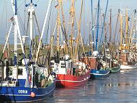 Krabbenkutter im Hafen von Dorum - Neufeld